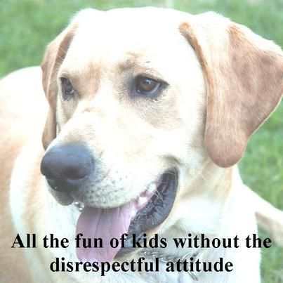 All the fun of kids without the disresptect